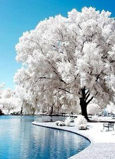 Invierno pero en un acogedor lago...