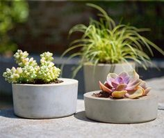 Use concrete to make planters for your adorable succulents. Check out this and 25 other DIY concrete projects via Brit + Co. Diy Concrete Planters, Concrete Bowl, Concrete Crafts, Modern Planters, Diy Planters, Planter Boxes, Succulent Planters, Cement Pots, Planter Ideas