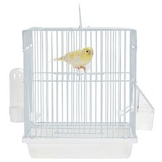 This Mali - Small Bird Travel Cage - Ice White is ideal for and other small birds. Shop now. Small Bird Cage, Small Birds, Pet Birds, Canary Cage, Budgies, Parrot Cages, Ice, Wood, Travel