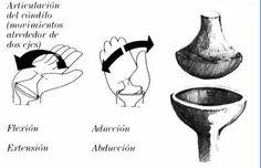 Diartrosis (CONDILEA - ARTICULACION DE LA MUÑECA)