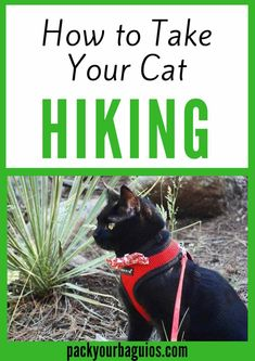 How to Take Your Cat Hiking | Cats | Hiking | Traveling with your pets | Traveling with your pets | Pack Your Baguios | Cat harness | Cat backpack