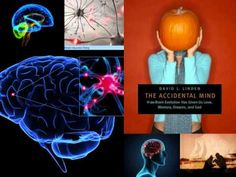 Neuroscience - Human Brain Evolution (Dr. Linden)