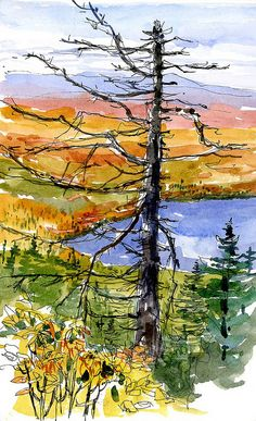 Watercolor by Shari Blaukopf via Flickr