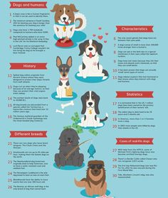 dog care,dog stuff,dog tips,dog training,dog hacks Dog Care Tips, Pet Care, Pet Tips, Puppy Care, Fun Facts About Dogs, Facts About Puppies, Puppy Facts, Education Canine, Dog Information