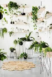 Image result for indoor plant