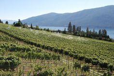 Gray Monk Winery in Winfield, British Columbia