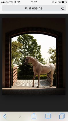 Arabien stallion guarding his home