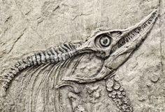 fossile: Squelette de dinosaure