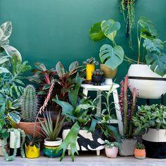 Toen de cactus zo'n 3 jaar geleden een comeback maakte in het interieur is 'ie niet meer weg te d...