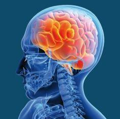 Dix constats clés de la recherche cognitive sur l'apprentissage (Schneider Stern, 2010)