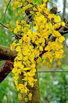 102 Best Bangladesh Images Flowers Gardens Bangladesh Travel
