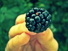 fresh fruits photos