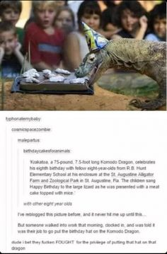 I would fight for the joy of putting the hat on the komodo dragon