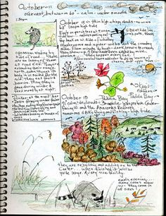 bird watching journal page- lets all collect examples of bird watching project elements to include in the early spring arrival of the birds