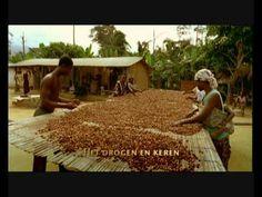 De teelt, oogst en verwerken van cacaobonen - YouTube A Blessing, Music Albums, Diy For Kids, Music Artists, Projects, Chocolate Factory, Technology, Africa, Musicians