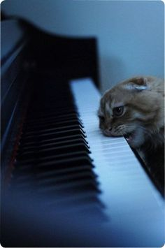 There are tons of cats on YouTube playing the piano... You have to be unique in order to get noticed. I'm playing with my teeth!
