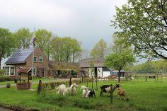Natuurhuisje 28083 - vakantiehuis in Dwingeloo