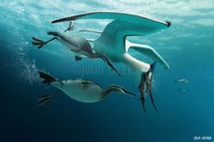 Fish Theft: Subaquatic edition by Julio-Lacerda.deviantart.com on @DeviantArt
