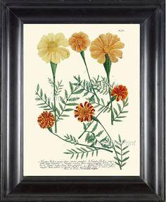BOTANICAL PRINT  Art Print W2 Beautiful Antique by LoveThePrint