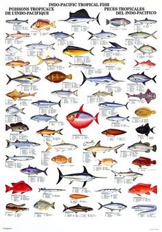 Image result for marine fishes of southeast asia images and names