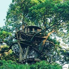 【seaofkyoto925】さんのInstagramをピンしています。 《#久美浜 #京丹後 #ツリーハウス #treehouse #sky #dream #景色 #絶景 #sweet #森林 #cute #夢 #ファインダー越しの私の世界 #写真好きな人と繋がりたい #love #photo #おしゃれ #海 #japan #beautiful #かわいい #wp_japan #like4like #自然 #happy #instagram_japan #オシャレ #instagood #お洒落 #お洒落さんと繋がりたい》