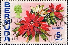 Bermuda 1970 Flowers Poinsettia Fine Used SG 253 Scott 259 Other West Indies and British Commonwealth Stamps HERE!