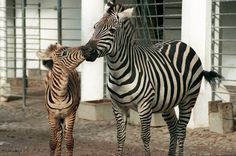 Top-Ranking: Die 10 beliebtesten Zoos & Tierparks in Deutschland - TRAVELBOOK.de