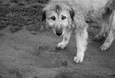 Sad Dog...