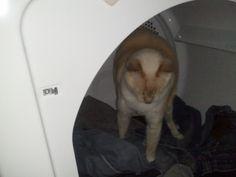 Piper inside the dryer