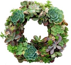 succulents wreath guideline layout ideas