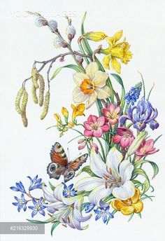 Yooniq images - Peacock Butterfly with Daffodils, Lily, Iris etc Arte Floral, Art And Illustration, Botanical Illustration, Butterfly Art, Flower Art, Fabric Painting, Painting & Drawing, Watercolor Flowers, Watercolor Paintings