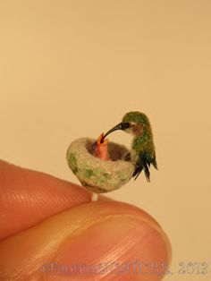 Amazing miniature hummingbird and baby