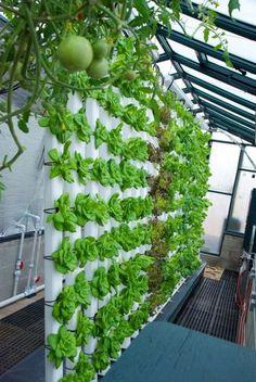 Aquaponics System, Hydroponic Farming, Aquaponics Greenhouse, Aquaponics Fish, Greenhouse Plants, Indoor Aquaponics, Greenhouse Growing, Vertical Vegetable Gardens, Home Vegetable Garden