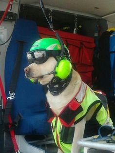 Helicopter rescue dog