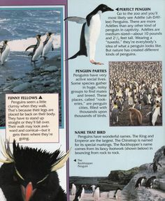 Penguin Facts | Penguin Place Kinds Of Penguins, Penguin Facts, Wearing A Tuxedo, Places, Movie Posters, Film Poster, Billboard, Film Posters, Lugares