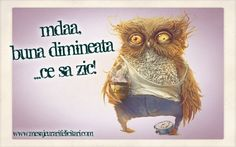 Good Morning, Funny Pictures, Owl, Bird, Humor, Desktop, Quotes, Projects, Photography