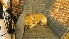 訪問先の企業の中には犬を飼っている企業もあったり。頭をなでても怒らない。実家の犬とは大違い。