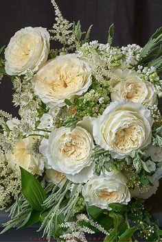 David Austin Wedding Rose Patience 015