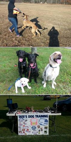 Jessica Tate utilizes effective dog training tricks in training dogs. She provides professional puppy training, basic obedience dog training, and off leash dog training services. Off Leash Dog Training, Dog Training Tips, Lake Hopatcong, Pet Trainer, Pet Sitting, New York City, Trainers, Puppies, Pets