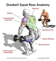 dumbell squat anatomy