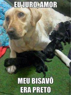 141 Melhores Imagens De Cachorros Funny Images Animaux E Cubs