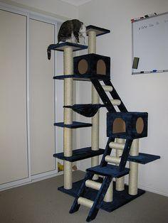 Cat Gym by zethos, via Flickr