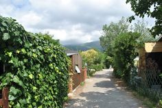 Con cane in Liguria. Sidewalk, Camping, Turismo, Italy, Walkways, Outdoor Camping, Pavement, Campers, Tent Camping