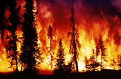 Image result for forest fire pictures