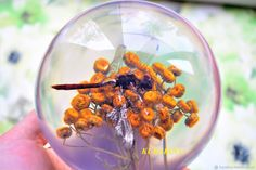 Купить Подарок племяннику шар Стрекоза - пресс-папье, шар с насекомыми в интернет магазине на Ярмарке Мастеров