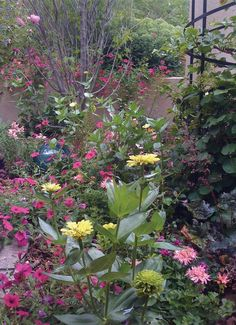 1000 Images About My Secret Garden Western Colorado On Pinterest Colorado Xeriscaping And