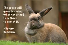 The grass will grow in spring whether or not I am there to munch it. - Bunny Buddhism