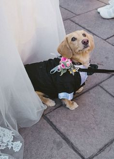 Dogs at weddings: 35 furry friends that are SO into your wedding day - Wedding Party Dog Wedding, Wedding Pics, Wedding Blog, Wedding Day, Tuxedo Wedding, Dream Wedding, Wedding Dresses, Low Wedding Centerpieces, Cute Wedding Ideas