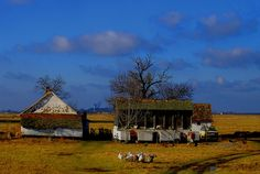 Uros Petrovic - Banatian House With Some Inhabitants by Uros Petrovic, via Flickr