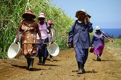 Women walking through sugar cane fields in Mauritius